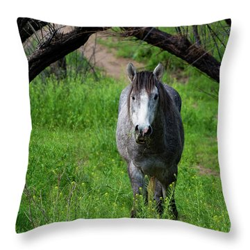 Horse's Arch Throw Pillow