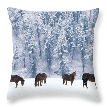 Horses In The Snow Throw Pillow by Alan and Sandy Carey and Photo Researchers