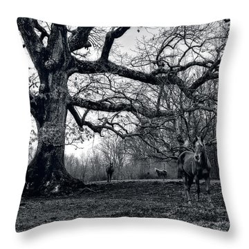 Throw Pillow featuring the photograph Horses On A Foggy Morning In Black And White by Greg and Chrystal Mimbs