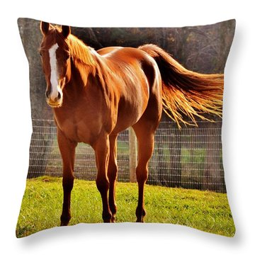 Horse's Tail Throw Pillow