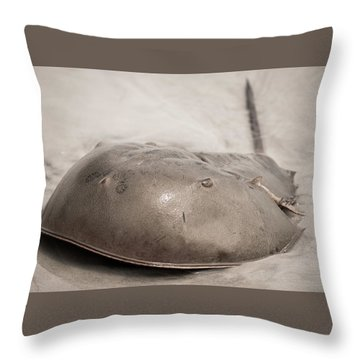 Throw Pillow featuring the photograph Horseshoe Crab by Chris Bordeleau