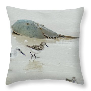 Throw Pillow featuring the photograph Horseshoe Crab With Migrating Shorebirds by Richard Bryce and Family