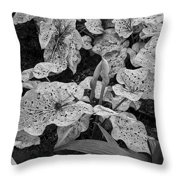 Hosta Bw - Pla363 Throw Pillow