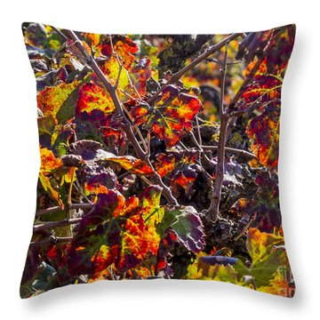 Hot Autumn Colors In The Vineyard 03 Throw Pillow