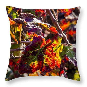 Hot Autumn Colors In The Vineyard 04 Throw Pillow