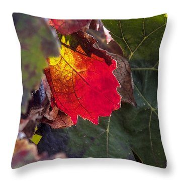 Hot Autumn Colors In The Vineyard Throw Pillow by Arik Baltinester
