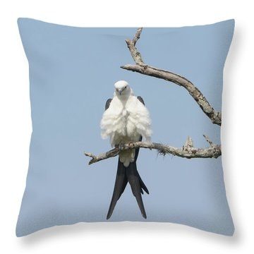 Hot Date Throw Pillow by Jim Gray