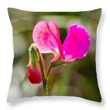 Hot Pink Sweet Pea 3365 Throw Pillow