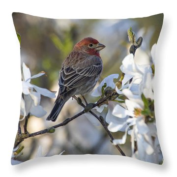Throw Pillow featuring the photograph House Finch - D009905 by Daniel Dempster
