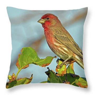 House Finch Throw Pillow