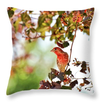 Throw Pillow featuring the photograph House Finch Hanging Around by Kerri Farley