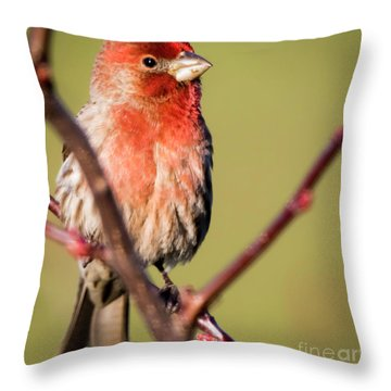 Throw Pillow featuring the photograph House Finch In Full Color by Ricky L Jones