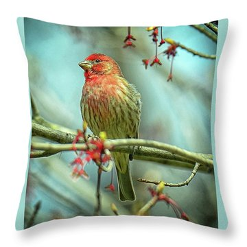Throw Pillow featuring the photograph House Finch In Spring by Rodney Campbell