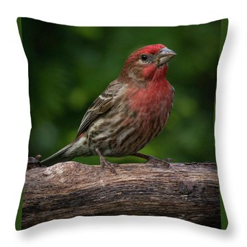 House Finch Throw Pillow by Kenneth Cole