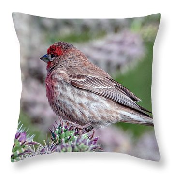 House Finch Male Throw Pillow
