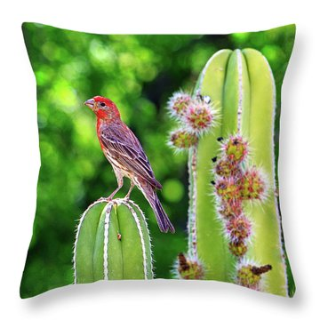 House Finch On Blooming Cactus Throw Pillow