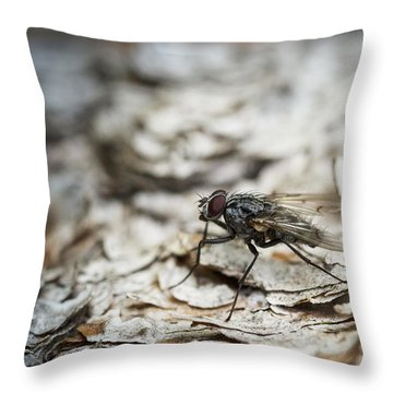 Throw Pillow featuring the photograph House Fly by Chevy Fleet