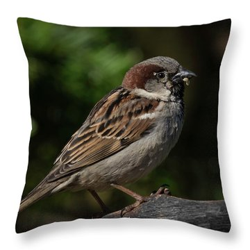 House Sparrow 2 Throw Pillow by Kenneth Cole