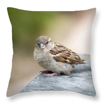 Throw Pillow featuring the photograph House Sparrow by Scott Lyons