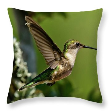 Throw Pillow featuring the photograph Hover by DJA Images
