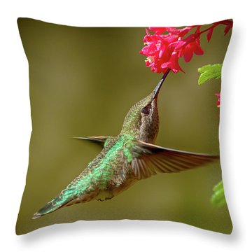 Hover Lunch Throw Pillow