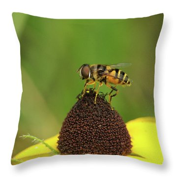 Hoverfly On Brown Eyed Susan Throw Pillow by Michael Peychich