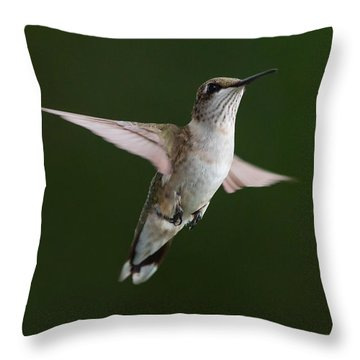 Hovering Hummer 3 Throw Pillow