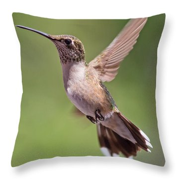 Hovering Hummer 1 Throw Pillow