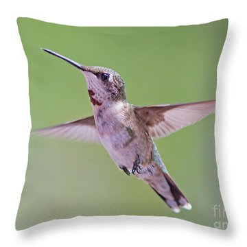 Hovering Hummingbird 5 Throw Pillow