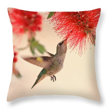 Hovering Hummingbird Throw Pillow