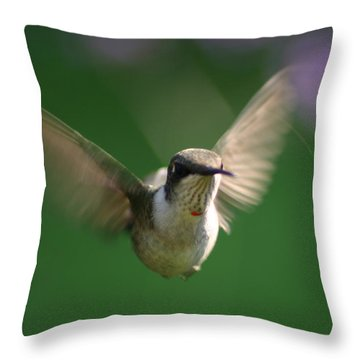 Hovering Hummingbird Throw Pillow by Robert E Alter Reflections of Infinity
