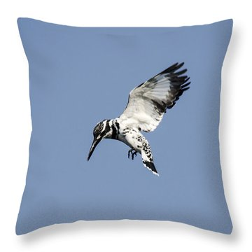 Hovering Of White Pied Kingfisher Throw Pillow