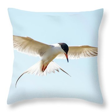 Hovering Tern Throw Pillow