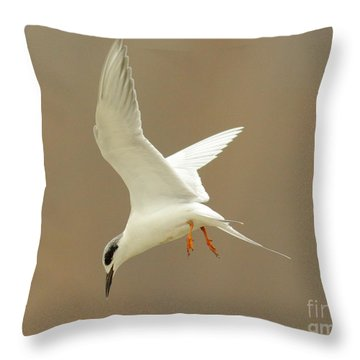 Hovering Tern Throw Pillow by Robert Frederick
