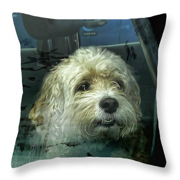 How Much Is That Doggie In The Window Throw Pillow