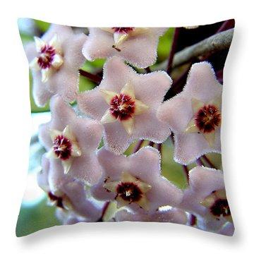 Hoya Blooms Throw Pillow