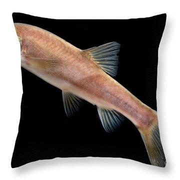 Huanjiang Golden Line Barbel Throw Pillow