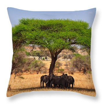 Huddled In Shade Throw Pillow by Adam Romanowicz