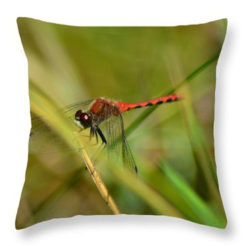 Throw Pillow featuring the pyrography Hudsonian Whiteface Dragonfly by Sally Sperry