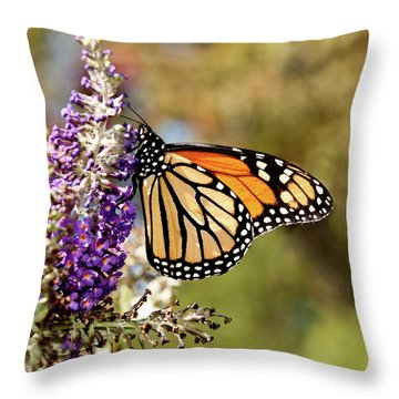 Throw Pillow featuring the photograph Hues Of Autumn Monarch by Lara Ellis