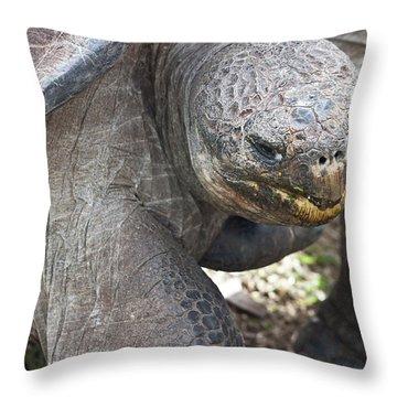Throw Pillow featuring the photograph Hugo Loves Cuddles by Miroslava Jurcik