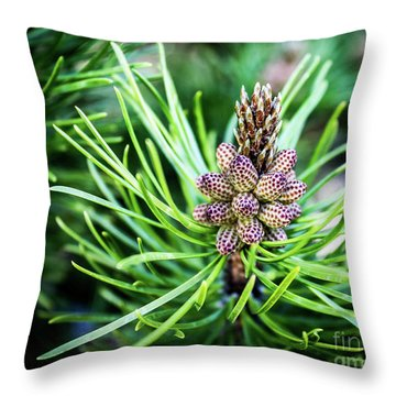Humble Beginnings Throw Pillow