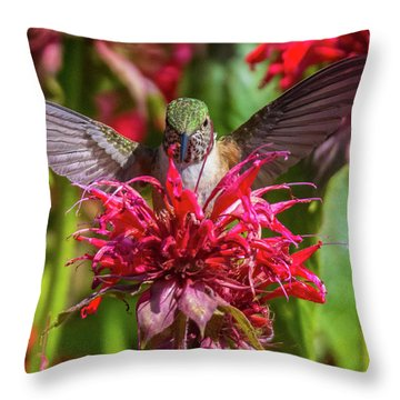 Hummingbird At Eagles Nest Throw Pillow