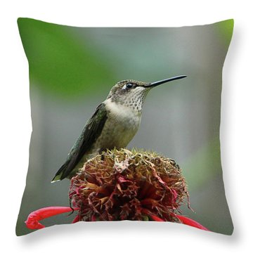 Humming Bird Atop Bee Balm Throw Pillow