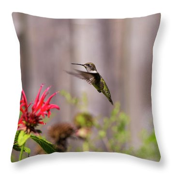 Humming Bird Hovering Throw Pillow