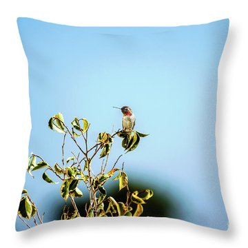 Throw Pillow featuring the photograph Humming Bird On A Branch by Micah May