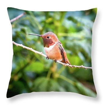 Humming Bird On Stick Throw Pillow by Stephanie Hayes