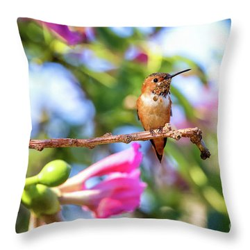 Humming Bird Pink Flowers Throw Pillow by Stephanie Hayes