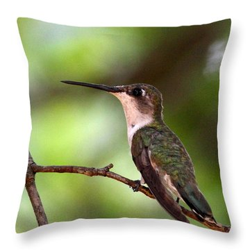 Hummingbird - Afternoon Ruby Throw Pillow by Travis Truelove