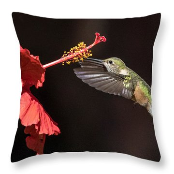 Hummingbird And Hibiiscus Throw Pillow